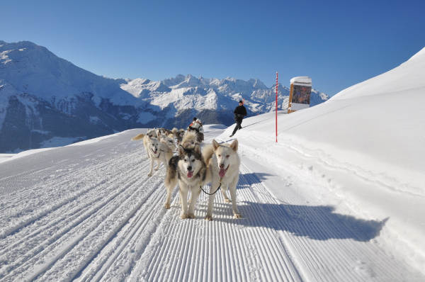 Dogs pulling a sledge in Verbier